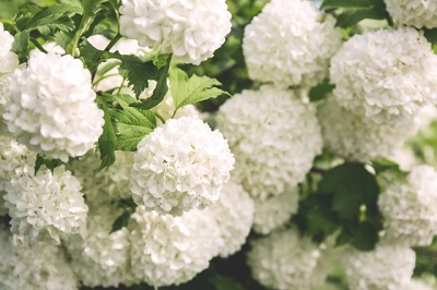 Allergie Planten Huid : Allergie en pollenkalender dutchflowerlink